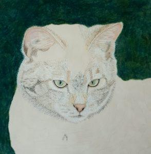 Wildcat Progress